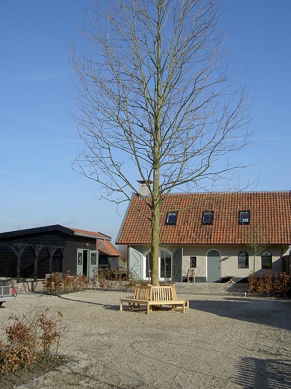 boombank zeshoek voor grote bomen